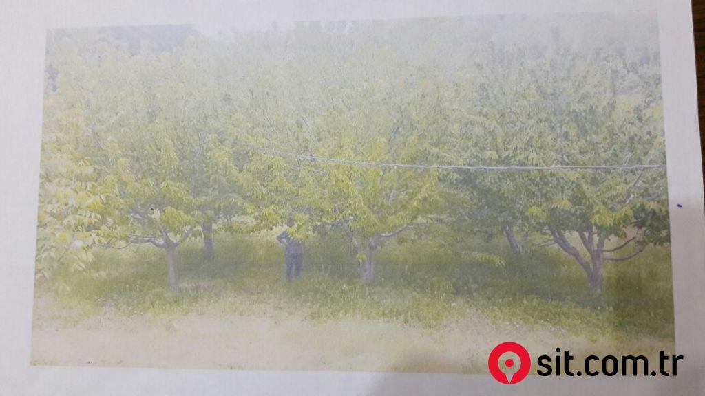 Satılık Emlak - Üretim Çiftliği İZMİR, BAYINDIR, HİSARLIK KÖYÜ 17530 m² 600,000