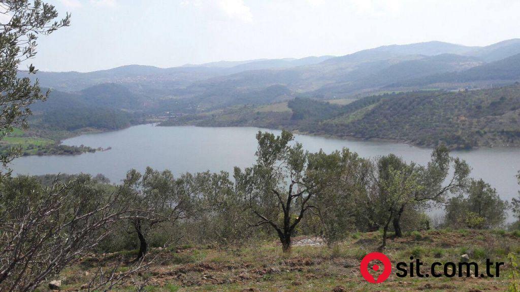 Zeytinlik 70 Dönüm, Kelepir, Baraj Kenarı, Çok verimli.. Edremit